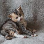 Mélie 4 semaines (2)