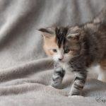 Mélie 5 semaines (6)