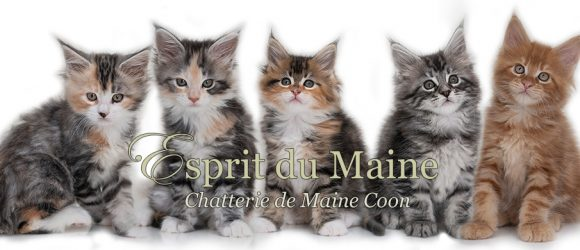 Bannière chatons