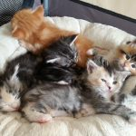Chatons groupes (2)