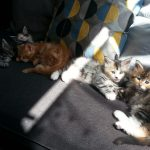 Chatons groupes (3)