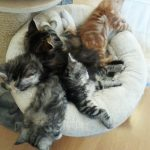 Chatons groupes (5)